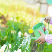 girl watering plants in garden